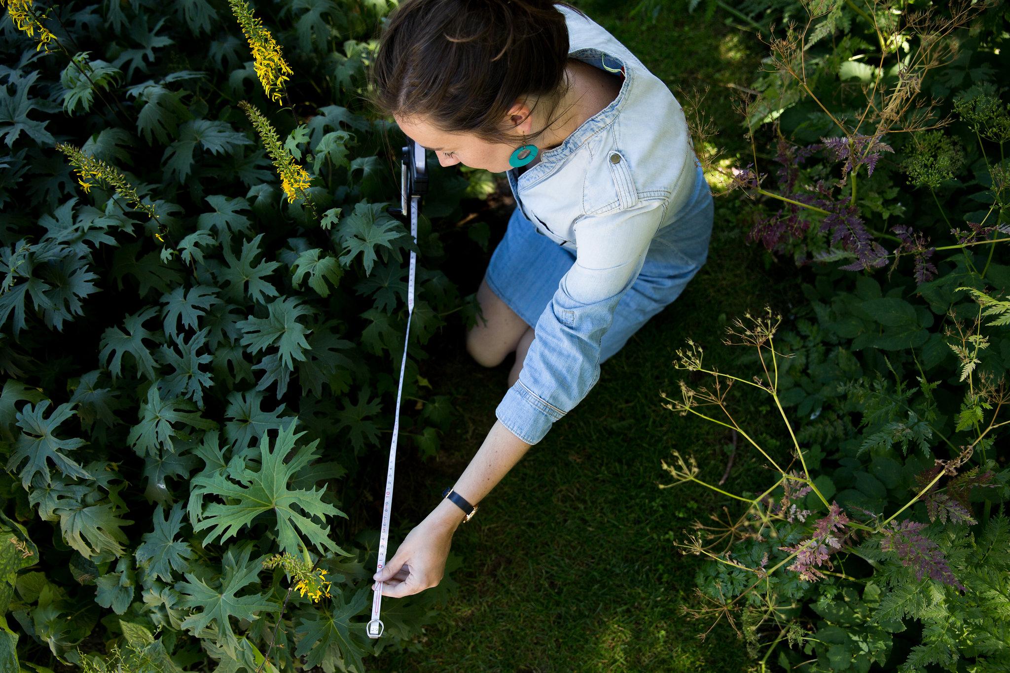 zelf tuin ontwerpen
